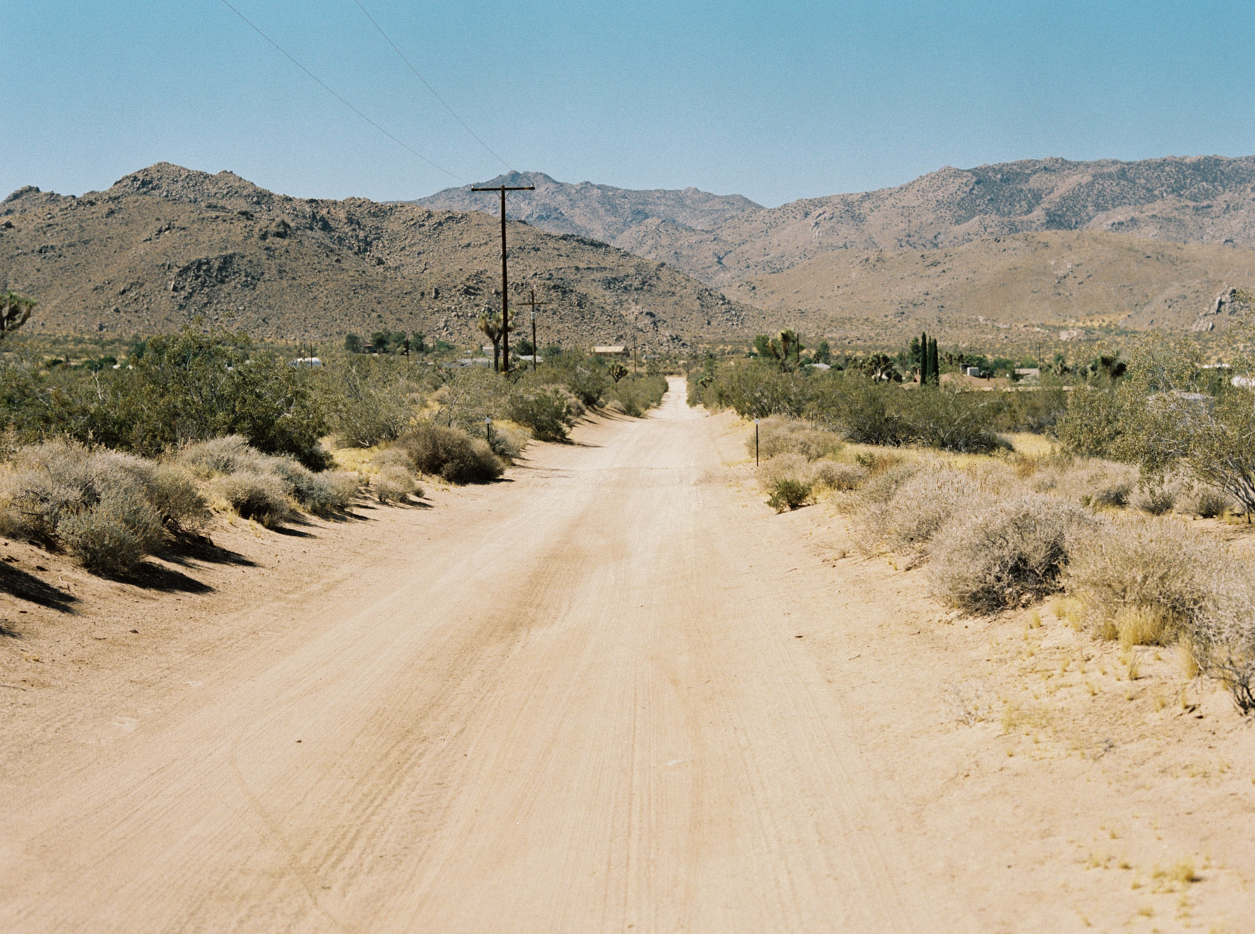 Wonder Valley Olive Oil, Justin Chung, Joshua Tree, California, Kodak